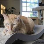 Mancats - He's Watching Me