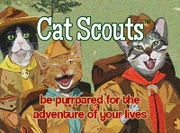 cat-scouts-membership-card-front-400x293