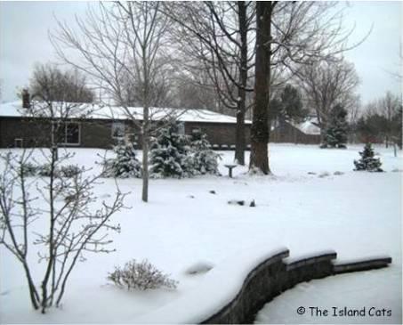 yard-snow