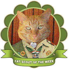 cat-scout-of-the-week-wally