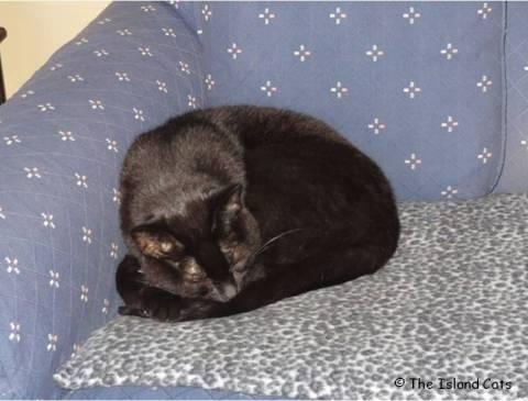 ernie-cushion