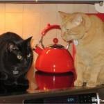 Mancats - Turkey Day's Coming