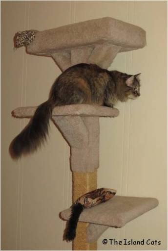 zoey-cattree