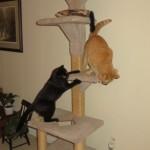 Mancats - Catch Me!