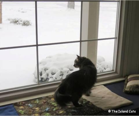 zoey-snow1