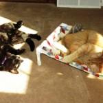 Mancats - Sunning Ourselves