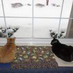 Mancats - No More Snow!