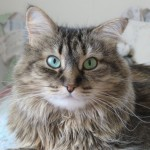 Formerly Feral - Wacky Whiskers