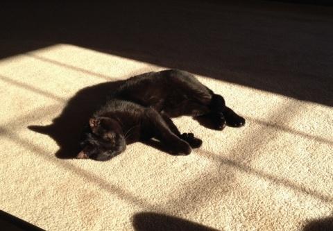 ernie-batcat1