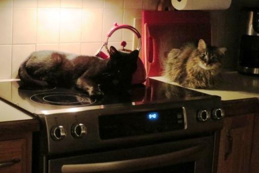 ernie-zoey-stove