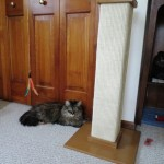 Formerly Feral - New Scratching Post