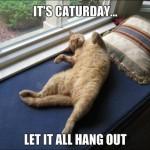 It's Caturday!