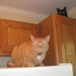 Mancats - I'm Not Alone
