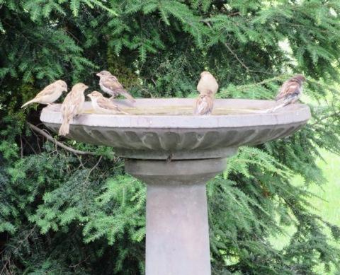 wally-birds2