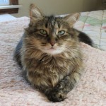 Formerly Feral - She's Leaving