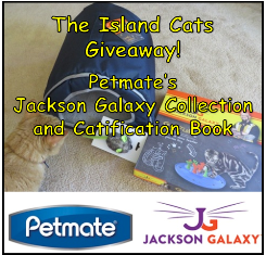 islandcats-giveaway - small