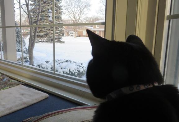 ernie-snow1