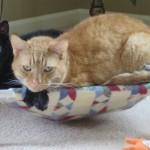 Mancats - If It Fits...We Sits