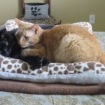 Mancats - An Afternoon Nap: A Pictorial