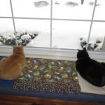 Mancats - We Gots Lots of Snow