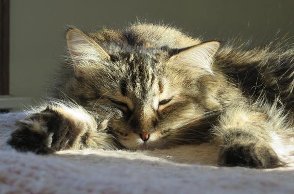 zoey-sleeping-1