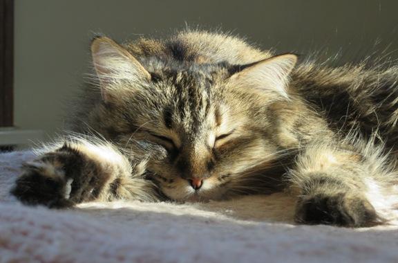 zoey-sleeping-2