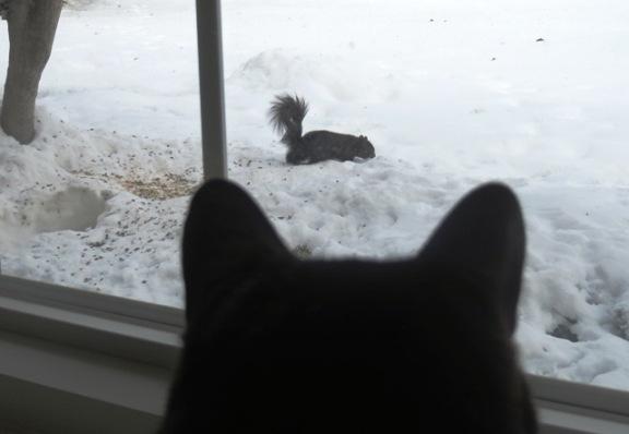 ernie-squirrel-1