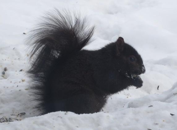 ernie-squirrel-selfie2