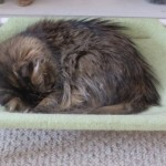 Formerly Feral - Sleeping Tight