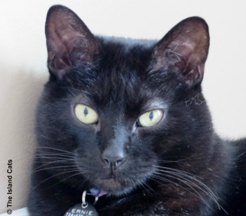 ernie-blackcat2 - Copy