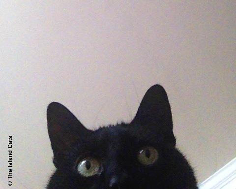 ernie-selfie3.22