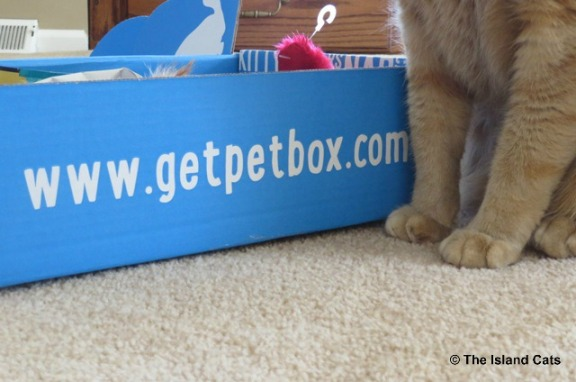 petbox-march-4