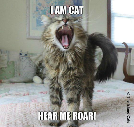zoey-roar1