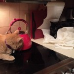 Mancats - Making Myself Comfortable