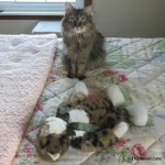 Formerly Feral - Stuffie CPR