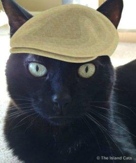 ernie-selfie-hat