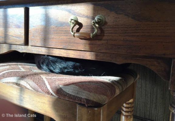 ernie-under-table1