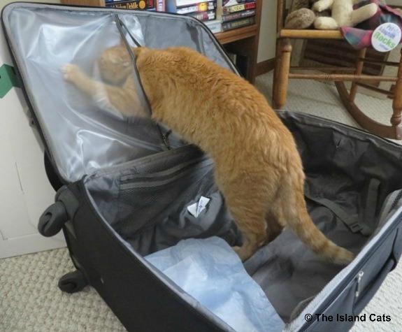 suitcase-3