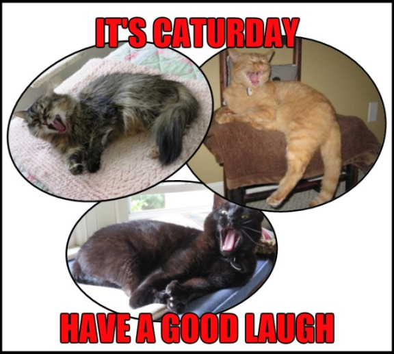 Image result for happy caturday images