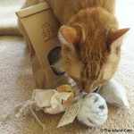 Purrfect Play Cat Toy Review & Giveaway