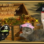 We Arrrr Meowin' Like Pirates!