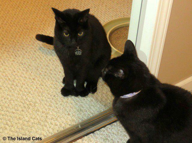 ernie-in-mirror