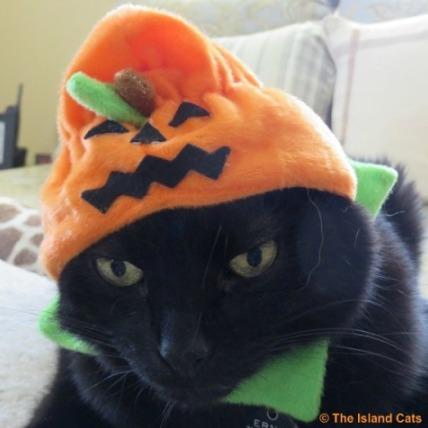 I'm a Pumpkin Head