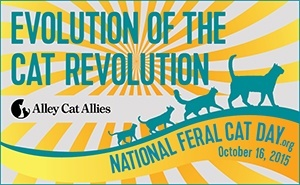 Evolution of the Cat Revolution