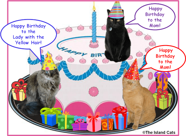 Happy Birthday To The Mom Island CatsEvery Cat Wants Be An
