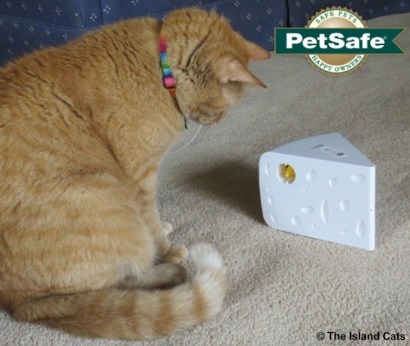 PetSafe Cheese Cat Toy-1