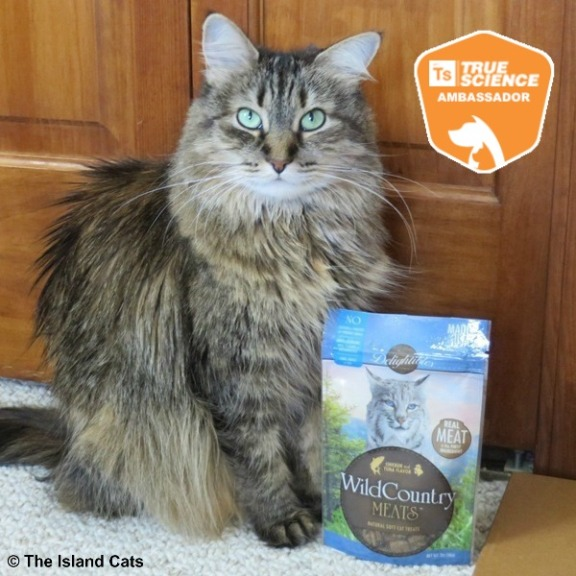 Zoey with Delightibles Wild Country cat treats