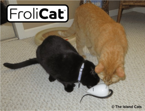 Wally and Ernie checking out the RoloRat