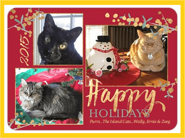 Island Cat Christmas Card 2015