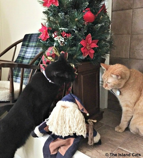Is that the real Santa Paws?